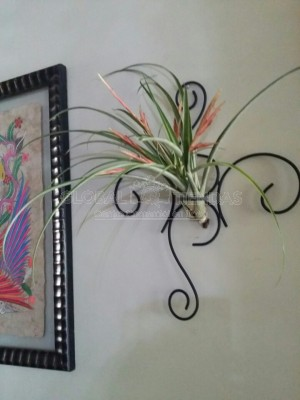 Base Sencilla de Pared para Tillandsia