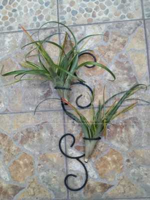 Base Doble de Pared para Tillandsia